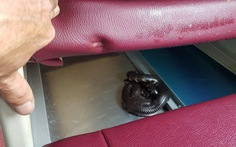 Khách lén đem balô đựng rắn lên xe đêm rồi để sổng, cả xe hoảng loạn