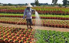 Nhộn nhịp làng hoa Sài Gòn