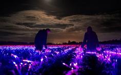 Dự án 'Grow' với cánh đồng phát sáng vào ban đêm tại Hà Lan