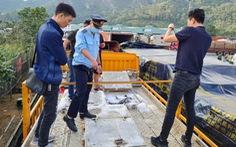 Cá tầm Trung Quốc 'lậu' tràn lan ở chợ đầu mối Hà Nội và TP.HCM