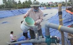 Sông Tiền bất ngờ tăng mặn, Tiền Giang gấp rút khoan giếng, đắp đập