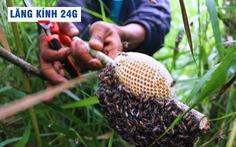 Lăng kính 24g: Bộ Y tế công bố 82 ca COVID-19 mới từ 'ổ dịch' Hải Dương và Quảng Ninh