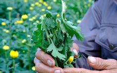 Kẻ gian đành đoạn phá 400 chậu hoa trong đêm, chủ vườn ôm món nợ