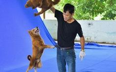 Hậu trường gay cấn khi chú chó đóng 'Cậu Vàng' đối mặt với bó đuốc, đàn trâu