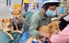 Vụ tiêu hủy chó ở Cà Mau: Chưa có bằng chứng nói động vật nhiễm COVID-19 lây sang người