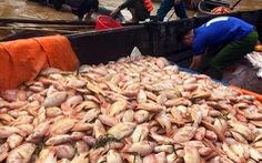 Mưa lũ, thủy điện xả nước dồn dập, hơn 750 tấn cá bè trên sông Đồng Nai chết trắng