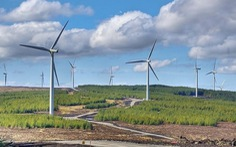 Cả ngàn MW điện gió chạy đua hòa lưới, chỉ 8% kịp hưởng ưu đãi giá 20 năm?