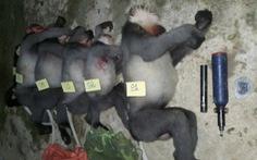 Thủ tướng yêu cầu xử lý nghiêm vụ 5 con voọc bị bắn chết