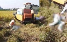 Hai người chết bên cạnh máy gặt lúa sau khi đường điện 35kV gặp sự cố