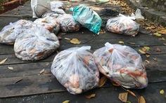 2 tấn cá chết trong hồ nước công viên Hoàng Văn Thụ