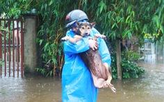 Chùm ảnh: Người dân Tam Kỳ bồng thú nuôi, dắt trâu 'chạy' lũ