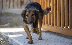 Nhiều chó cưng ở Anh bị bỏ rơi sau khi hết giãn cách xã hội