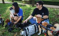 Cặp đôi vợ Việt chồng Tây làm xe lăn cho chó mèo khuyết tật ở Sài Gòn
