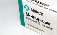 Châu Âu xem xét duyệt thuốc Molnupiravir đặc trị COVID-19