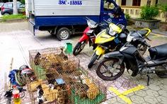 Sắm cả xe tải để một ngày trộm cắp được 36 con mèo