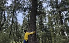 Chỉnh đường 'nghìn tỉ' ven biển để giữ rừng phòng hộ