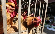 Trung Quốc phát hiện thêm người nhiễm virus cúm gia cầm H5N6