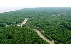 Mục tiêu đến năm 2030 trồng mới 20.000 ha rừng ngập mặn, phòng hộ