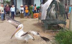 Sợ truông Nhà Hồ sợ phá Tam Giang - Kỳ 5: Đầm phá linh thiêng cho chim quý bay về