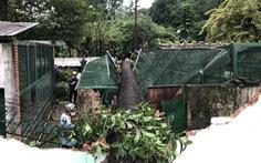 Cây xanh lớn bật gốc đè sập chuồng thú trong Thảo cầm viên Sài Gòn