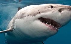 Hơn 70% quần thể cá mập và cá đuối đã bị 'xóa sổ' trong 50 năm qua