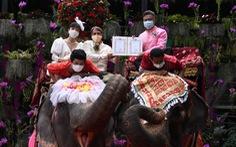 52 cặp đôi Thái làm đám cưới trên lưng voi vào ngày Lễ tình nhân
