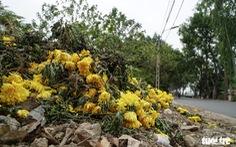 Người dân Tây Tựu xót xa nhìn hoa rằm tháng giêng vứt đầy đường