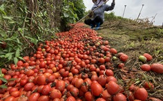 Bán không ai mua, nông dân chở cả ôtô rau đổ xuống sông Hồng