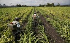 Đại dịch COVID-19 góp phần khiến giá thực phẩm tăng cao