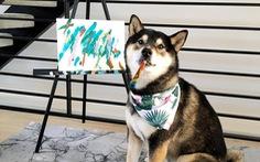 Chó Shiba bán 288 bức tranh tự vẽ, thu gần 18.000 USD