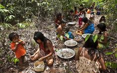 Cuộc chiến phủ lại rừng xanh - Kỳ 5: Những hạt giống 'nhiệm mầu' ở Brazil