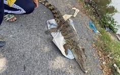 Thực hư chuyện cá sấu xuất hiện trên sông ở Tiền Giang