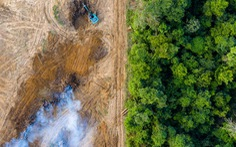Chỉ 1/3 rừng mưa nhiệt đới trên Trái đất còn nguyên vẹn