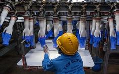 Nhu cầu găng tay cao su toàn cầu có thể vượt cung cho đến năm 2023