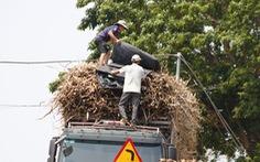 CSGT đã ra quân, xe chở mía cồng kềnh vẫn tung hoành trên quốc lộ 26