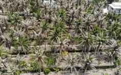 Khoanh vùng tiêu diệt sâu đầu đen hại dừa ở Bến Tre