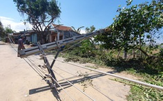 Vụ xe 'hạ gục' 9 trụ điện: 'Tiêu chuẩn thiết kế trụ điện không tính tới tai nạn bất ngờ'