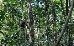 Thả khỉ đuôi lợn và trăn gấm do người dân giao nộp về rừng tự nhiên