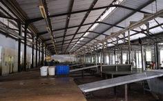 Lò giết mổ gia súc ô nhiễm môi trường, Đà Nẵng muốn tìm vị trí mới