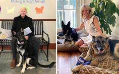 Chó cưng của ông Biden bị cho 'về quê' vì cắn nhân viên an ninh Nhà Trắng
