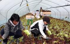 Hàn Quốc gia hạn lưu trú 1 năm cho lao động nước ngoài, bao gồm Việt Nam