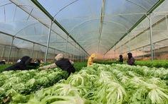 Lạc Dương - Hướng tới một nền nông nghiệp xanh