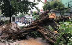 Sáng 16-4, Sài Gòn mưa lớn, nhiều cây bật gốc, tét nhánh, 1 người cấp cứu