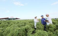 'Cây trăm tỉ' trong thuốc bổ não thảo dược đứng đầu thị trường Việt Nam