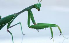 Muỗi, chuột, côn trùng… cắn phá gần 27 tỉ USD mỗi năm