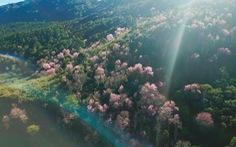 Phát động trồng 'rừng trong thành phố, thành phố trong rừng'
