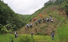 Trồng quế bản địa gây rừng ở Quảng Nam