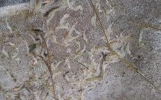 Hơn nửa triệu con tôm giống chết sạch, trên hồ còn bao nilông chứa thuốc sâu