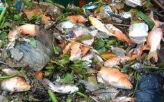 Hai cơn mưa trái mùa làm chết 14 tấn cá trên kênh Nhiêu Lộc - Thị Nghè