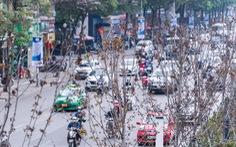 Hà Nội bỏ toàn bộ hàng phong lá đỏ trên đường Nguyễn Chí Thanh